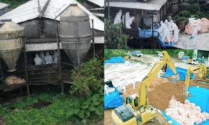 日本沖繩豬瘟