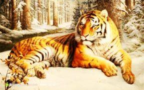 老虎为什么不吃他