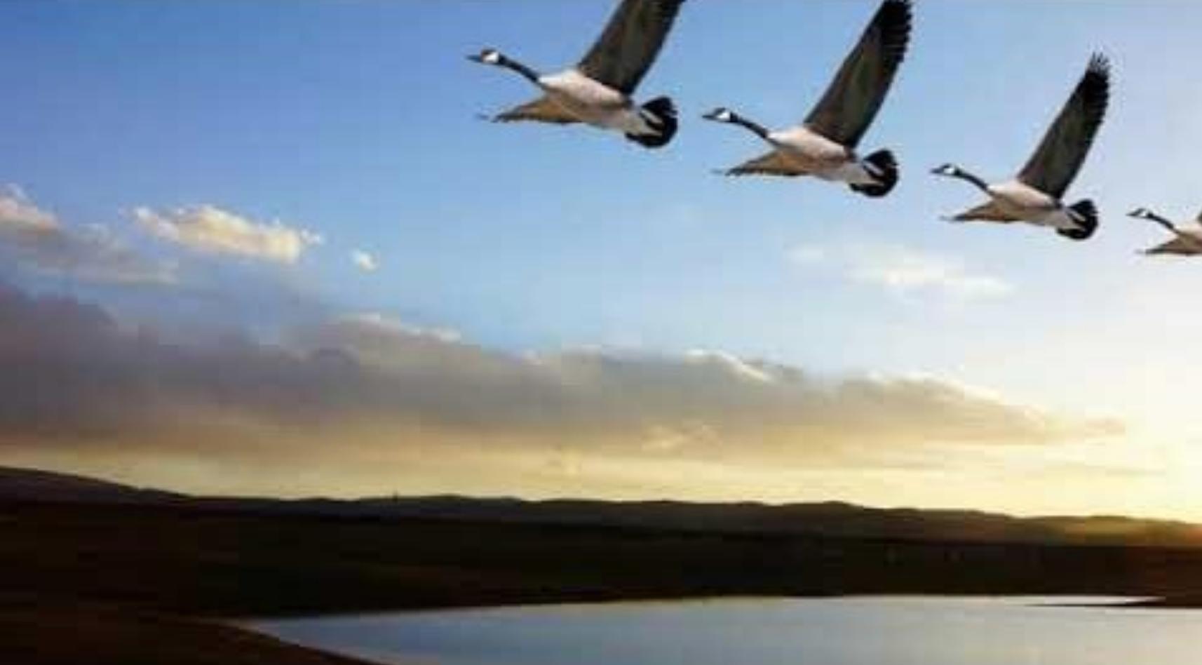海外義工、法輪功學員打給國內的一通通電話,如美麗的飛鴻穿越大洋。(圖片來源:網絡圖片)